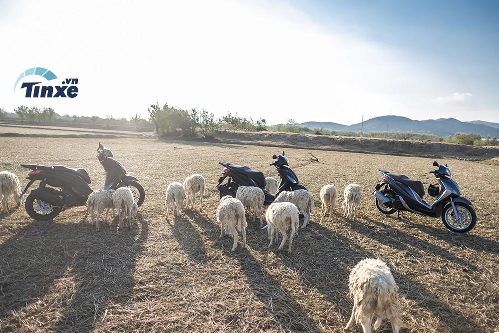 Những chiếc xe Piaggio Medley ABS 2018 sau hành trình 170km thong thả dạo chơi bên những chú cừu của tỉnh Ninh Thuận