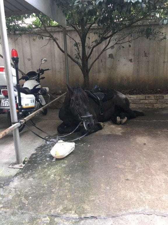 Chú ngựa được cột bên ngoài đồn cảnh sát