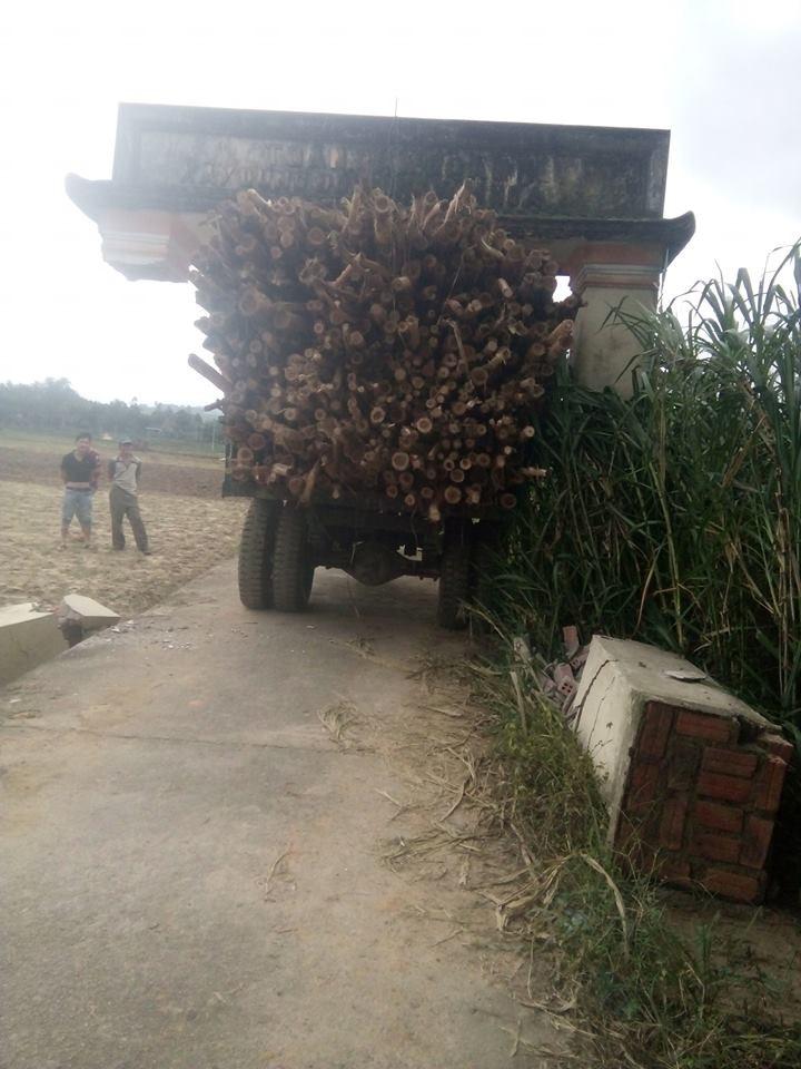 Cổng làng Gia Hội mắc vào đống gỗ cây keo trên chiếc xe máy cày
