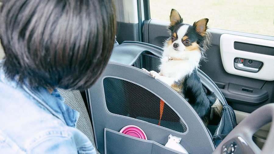 Chó là một thú cưng gắn liền với cuộc sống hàng ngày của không ít người