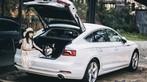 Audi A5 Sportback khác lạ trong ngôi nhà gỗ bên rừng - 5