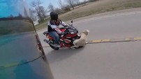 Đâm phải chó, hai biker thoát khỏi gầm xe tải trong gang tấc