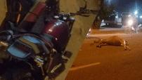 Phượt đêm, biker điều khiển Benelli Leoncino đâm vào bò trên đèo Cù Mông