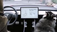 """Tesla cập nhật tính năng mới khiến Model 3 """"không thể bị trộm"""" và bảo vệ chó cưng"""