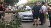 Thái Nguyên: Đang lưu thông trên đường, Toyota Camry bị cành cây lớn rơi trúng