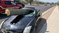 Gặp tai nạn chưa đủ, xe thể thao Infiniti còn bị cây xương rồng nặng hàng trăm kg đâm xuyên kính lái