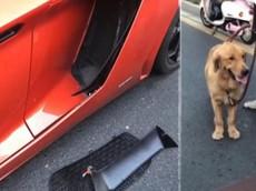 """Chó cưng chạy ra đường và gây tai nạn cho siêu xe Lamborghini Aventador, nữ chủ nhân """"đền ốm"""""""