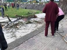 Hà Giang: Đang đi bộ thì bị cành cây gạo rơi trúng đầu, nam thanh niên tử vong tại chỗ