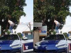 """Cư dân mạng ngỡ ngàng với bức ảnh Minh """"Nhựa"""" đứng trên nóc xe Lamborghini Urus để hái xoài"""