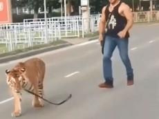 Chỉ ở nước Nga: Hổ nhảy khỏi ghế hành khách, chạy rông giữa đường