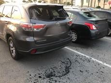 Người đàn ông đập phá 20 chiếc ô tô vì cho rằng Tổng thống Mỹ nợ tiền mình
