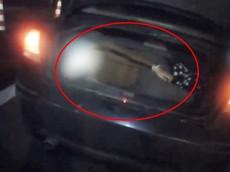 """Giữa dịch corona, nam thanh niên giấu bạn gái trong cốp xe để mong """"thông chốt"""" lực lượng chức năng"""
