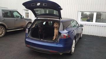 Tesla Model S độ Shooting Brake là chiếc xe hoàn hảo cho những ai nuôi chó