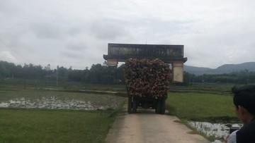 Quảng Nam: Xe chở gỗ cõng theo... cổng làng mà tài xế không hề hay biết