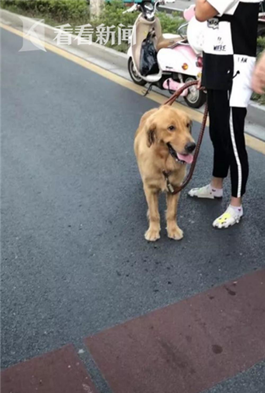 Chú chó của bà Zhou tại hiện trường vụ tai nạn