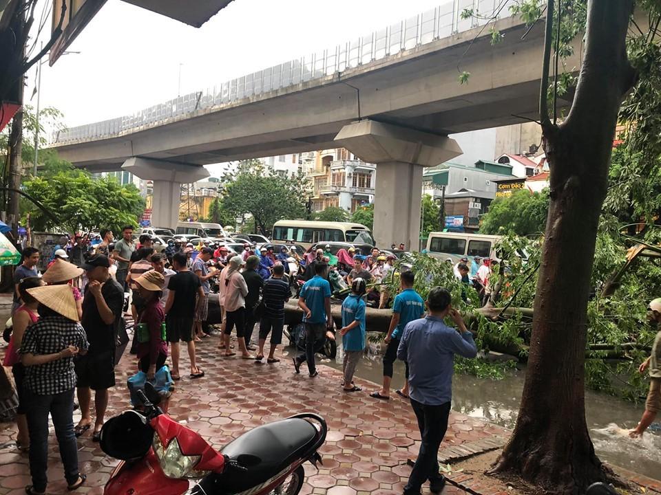 Cây đổ chắn ngang đường đã khiến đường Hào Nam bị ùn tắc giao thông nghiêm trọng
