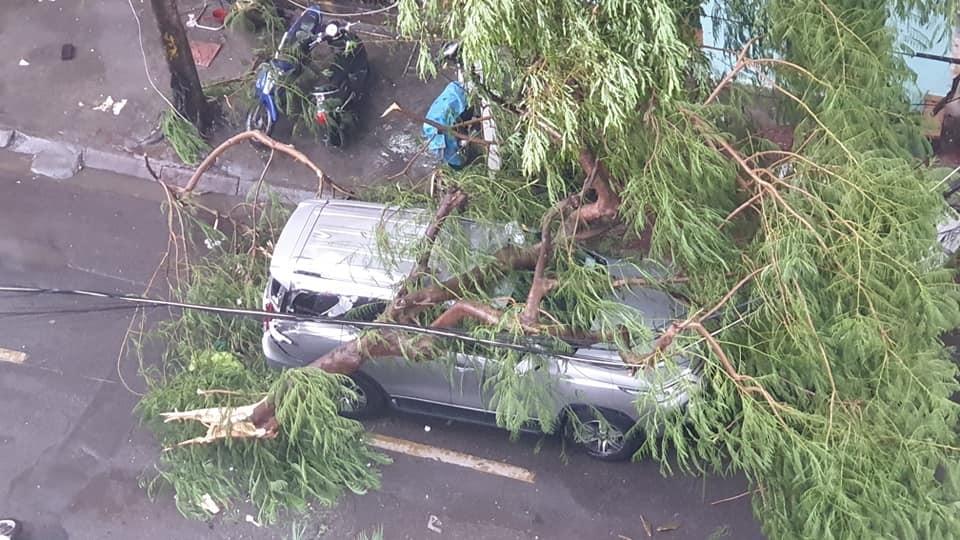 Cành cây lớn rơi trúng nóc của chiếc ô tô trên phố Phạm Hồng Thái