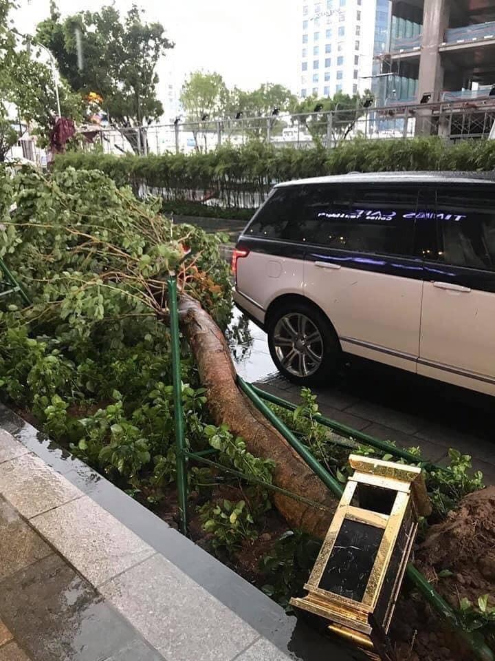 Bức ảnh chụp lại cho thấy một cây xanh ngã cách đuôi xe chiếc SUV hạng sang Range Rover Autobiography chỉ vài phân