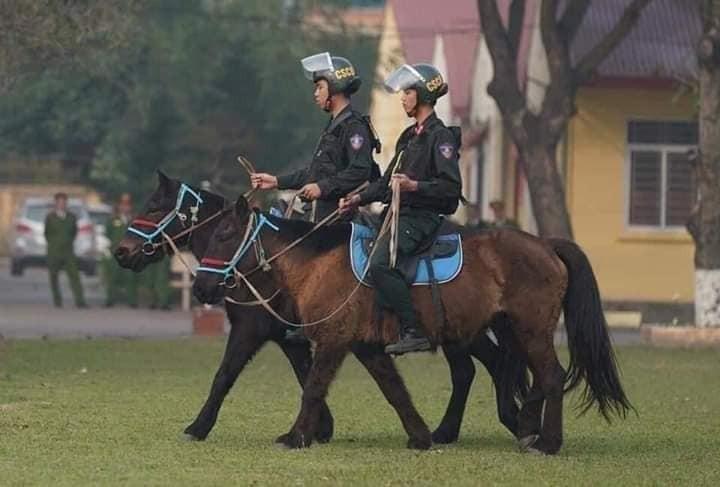 105 con ngựa từ Mông Cổ sẽ cùng các chiến sĩ CSCĐ tham gia tuần tra, phòng chống tội phạm trong năm nay