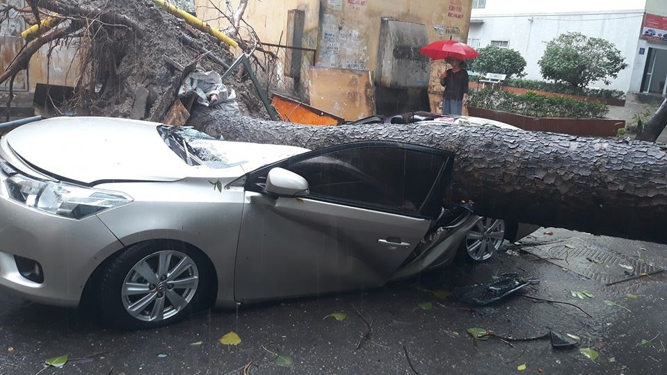 The Toyota Vios was crushed by the trees and damaged quite heavily