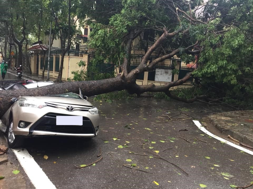 The Toyota Vios was crushed by the trees