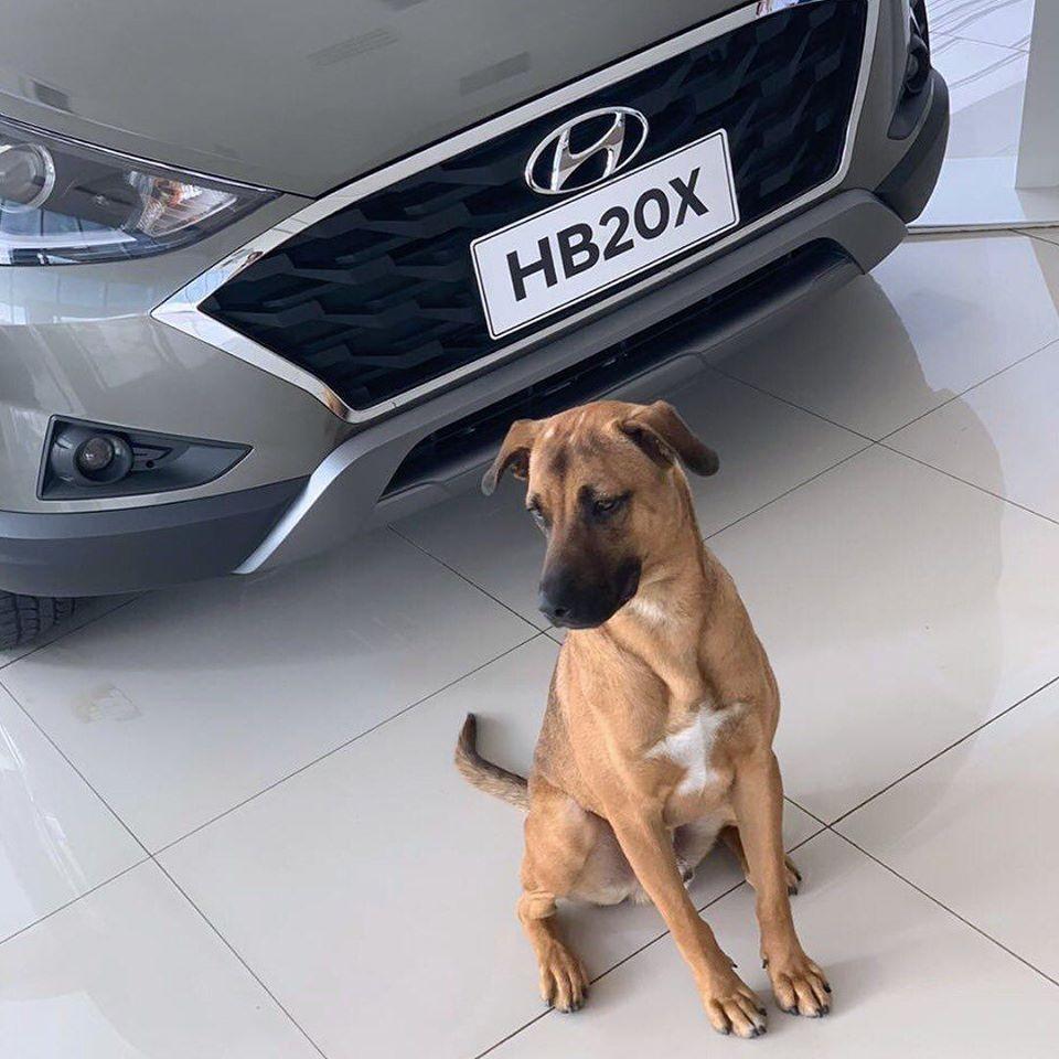 Hình ảnh nhân viên 4 chân của đại lý ô tô Hyundai đã gây xôn xao trên mạng xã hội