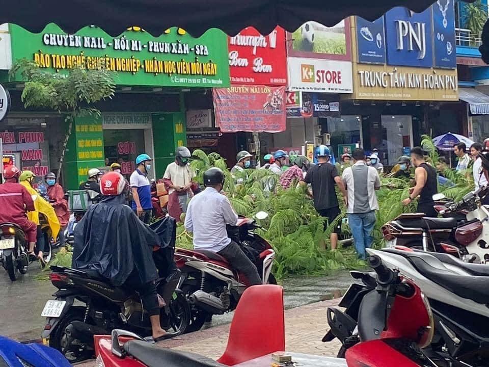 Hiện trường vụ tai nạn xảy ra tại TP Hồ Chí Minh do cây phượng bật gốc
