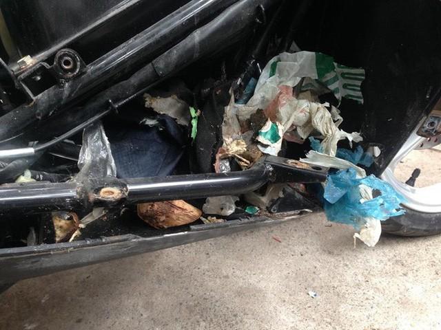 Chuột tha rác vào các phần kín của xe khiến chúng bốc mùi và dễ cháy nổ