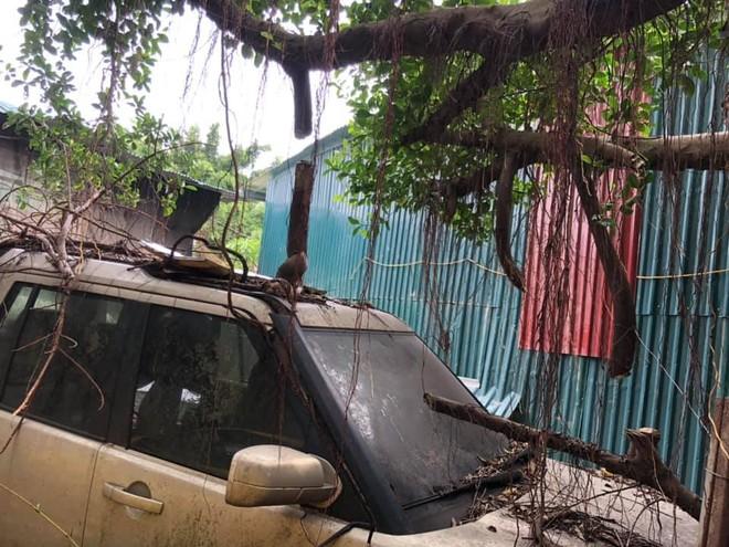 Nóc xe và nắp capô xuất hiện nhiều cành cây và rễ