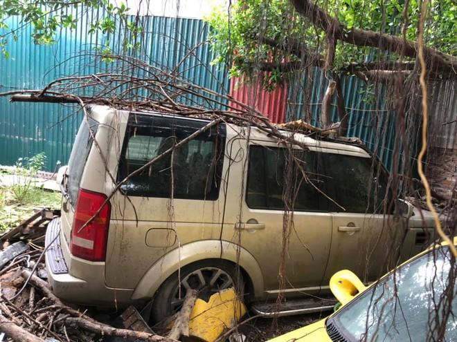 Các rễ cây bám xung quanh chiếc Land Rover Discovery này