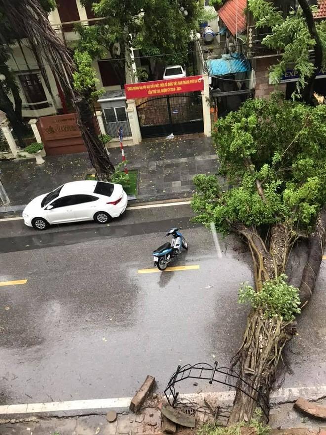 Cây đổ ngang phố trên tuyến đường Tô Hiến Thành.