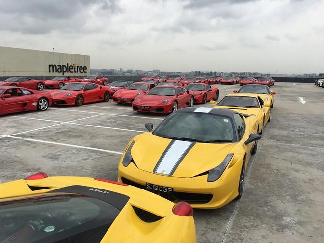 Những chiếc Ferrari màu vàng xếp hàng dài cùng nhau